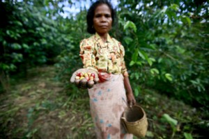 coffee-pickers-in-timor-leste